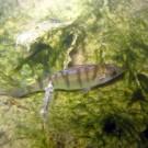 Tauchen im Ellmannsee