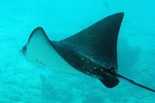 Tauchfoto Seychellen